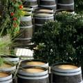 Bulgaria a exportat aproximativ 21.6 milioane litri de vin