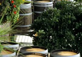Exportul  de vin Bulgăresc creşte  încet  dar sigur