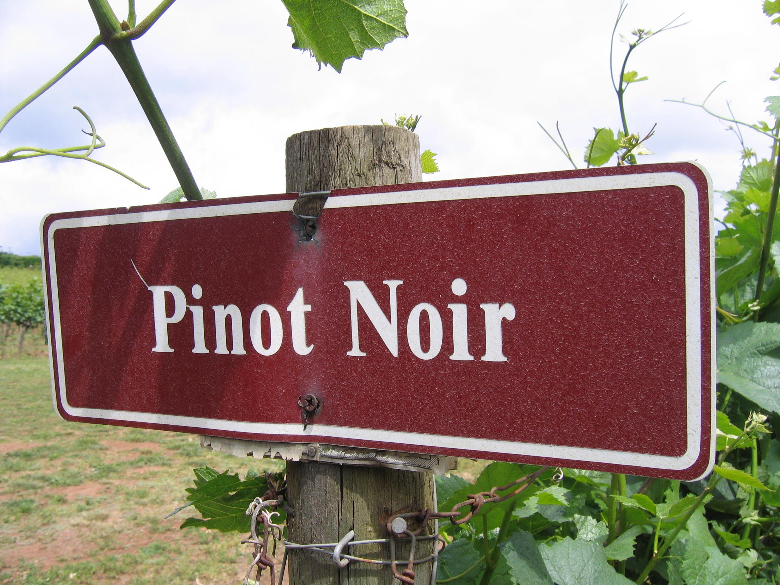 Pinot Noir Vinuri