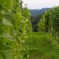 Franta vinuri selecte