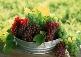 Week-end cu vinuri noi