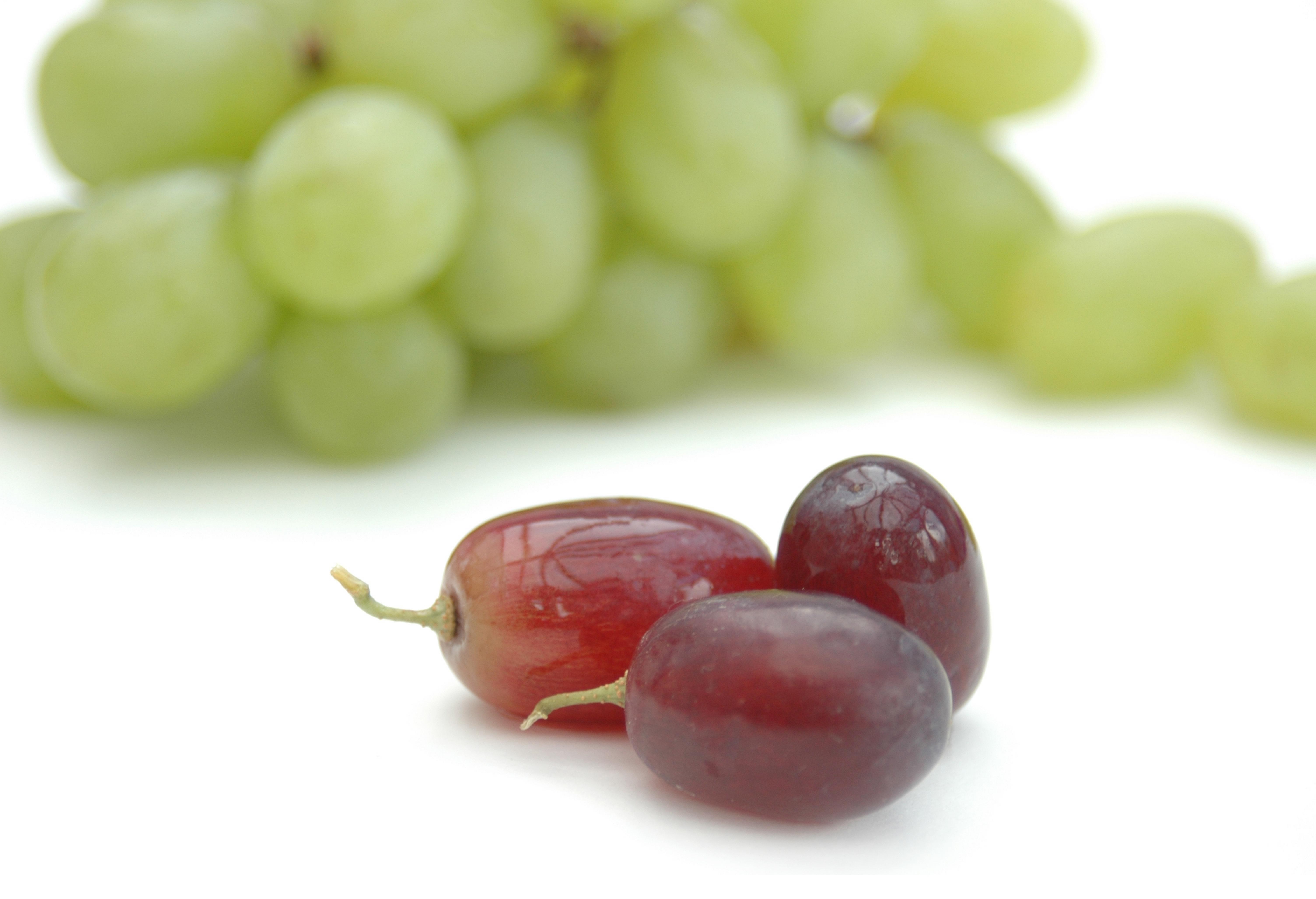 Vinurile bio si viticultura ecologica